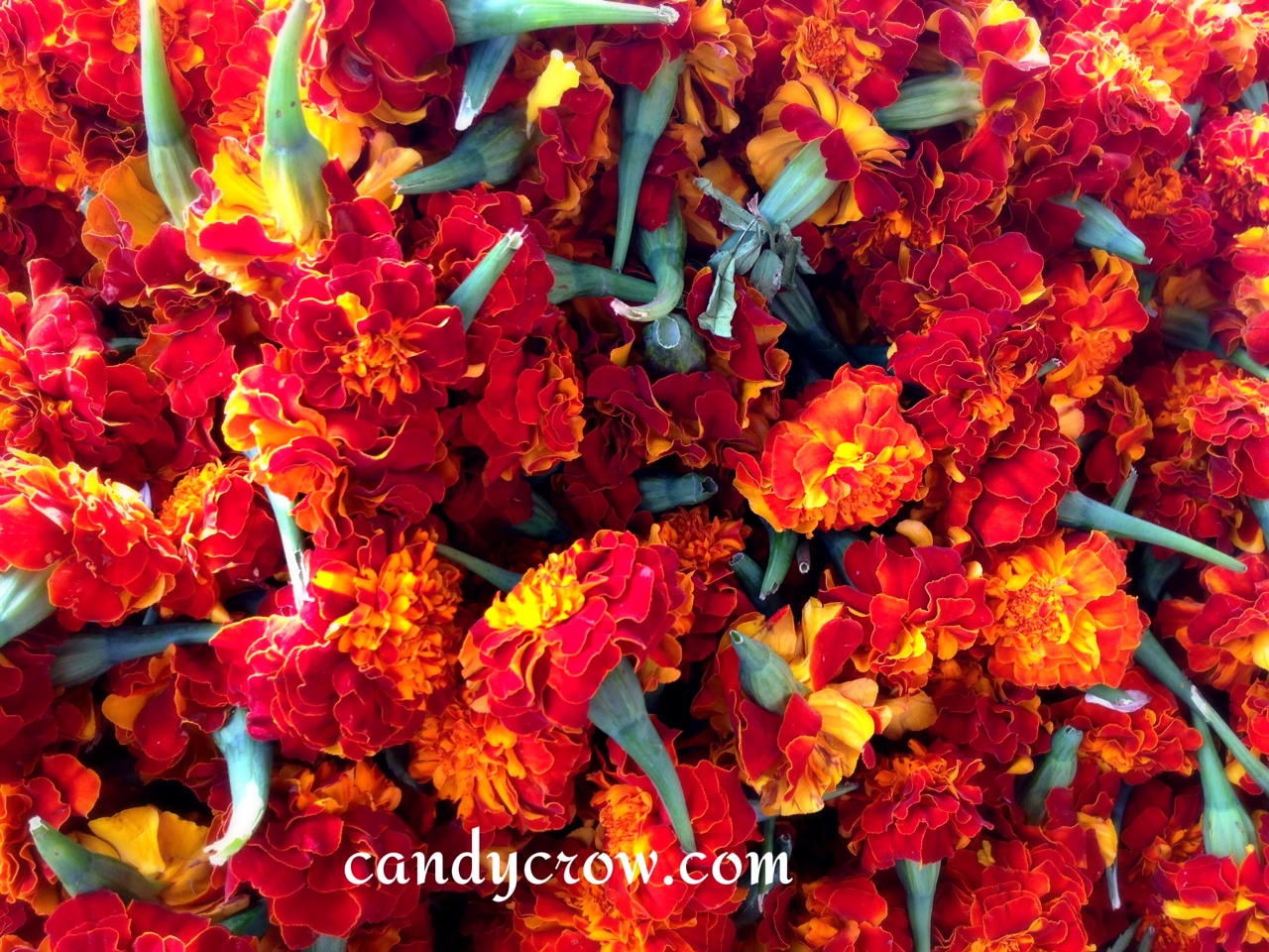 Flower Market | Hyderabad