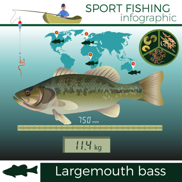 Bass Fishing Online - Take Your Best Shot