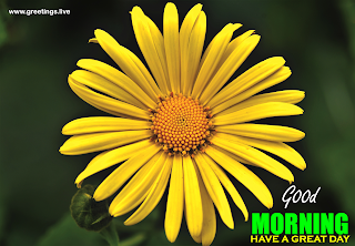 good morning yellow flowers greetings wishes message