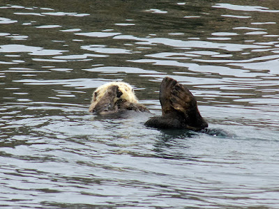 There Were Plenty of Sea Otters to Photograph