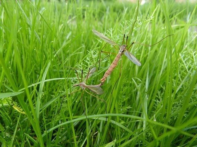 Top 10 sự thật thú vị về loài muỗi có thể bạn chưa biết