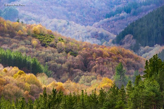 Bosques de Los Oscos - Asturias