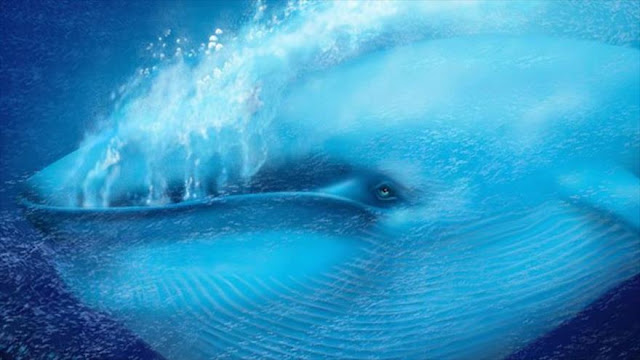 ¿En que consiste juego de ballena azul que deja tantas víctimas?