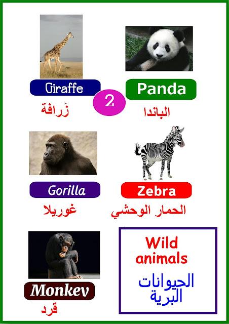 قاموس الحيوانات المصور للأطفال بالعربية والإنجليزية
