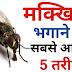 बारिश के मौसम में परेशान कर रही मक्खियां, तो जानें मक्खी भगाने के देशी नुस्खे