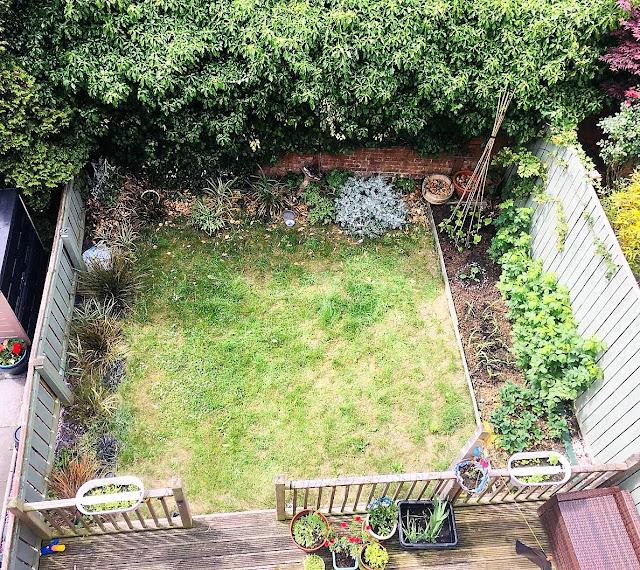 hedgehog uk garden habitat