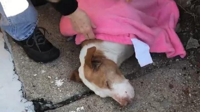 Собака оказалась на морозе и начала замерзать, после того как упала в обморок