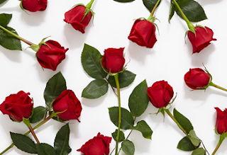 Happy Valentines Day 2018 Red Roses HD Images