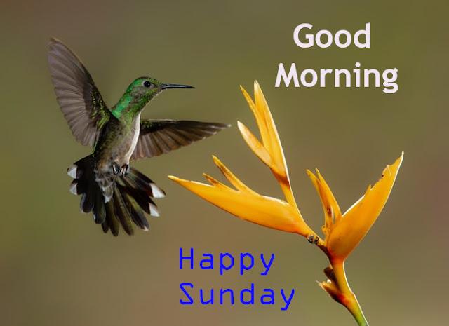 Good Morning Happy Sunday Beautiful