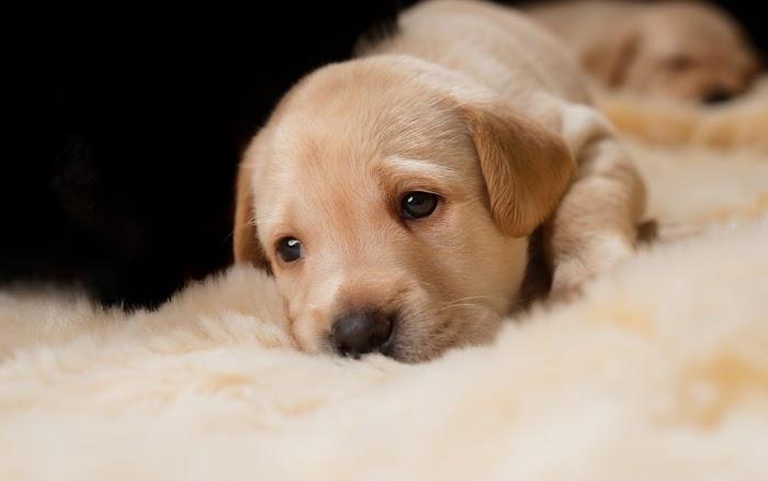 Hayvanlarda Görülen Psikolojik Sorunlar