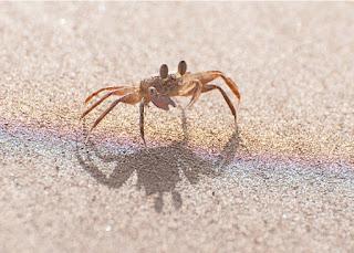 https://www.google.ca/search?biw=1440&bih=721&tbm=isch&sa=1&q=small+crabs&oq=small+crabs&gs_l=img.3...18239.20569.0.20695.0.0.0.0.0.0.0.0..0.0....0...1.1.64.img..0.0.0.E8RV2s81_mo#imgrc=KXKXhuohFXJApM: