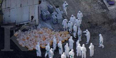 Rusia Mengumumkan Penularan Kasus Pertama Flu Burung Pada Manusia