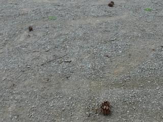 地面に散乱している果実殻