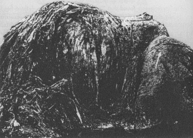 Penembakan Selandia Baru Wikipedia: 10 Makhluk Misterius Yang Pernah Terdampar Di Pantai