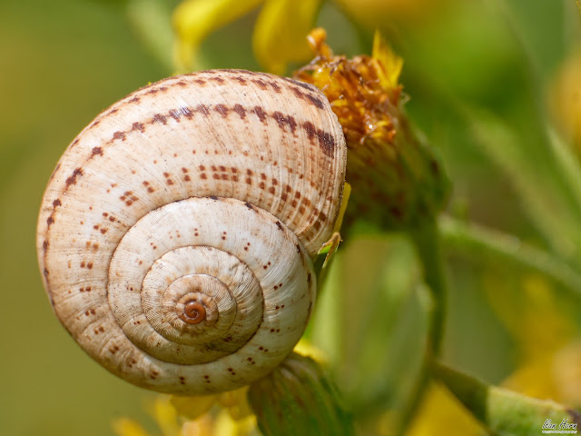Snail Shell Closeup