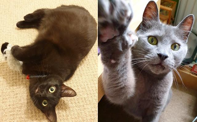 winnie, winston, cats, pets