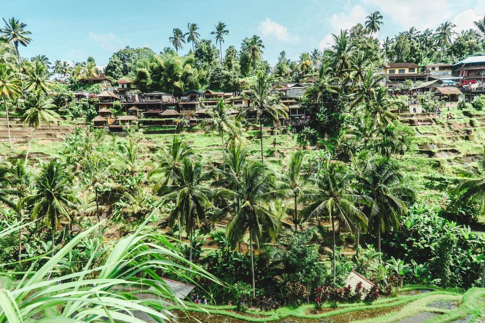 Tegallalang Rice Terrace Bali Indonesia