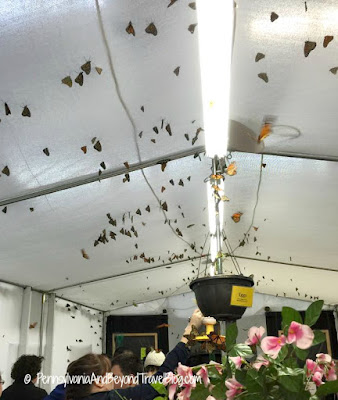 Folk's Butterfly Farm at the Pennsylvania Farm Show