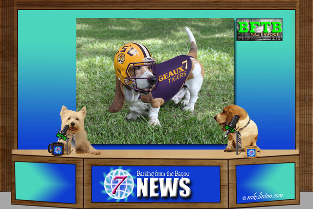 BFTB NETWoof Dog News reports on a BSU football tee retriever