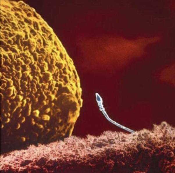 Con tinh trùng chiến thắng