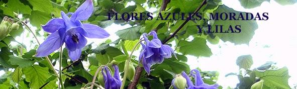 Aguileña (Aquilegia vulgaris) flor silvestre azul