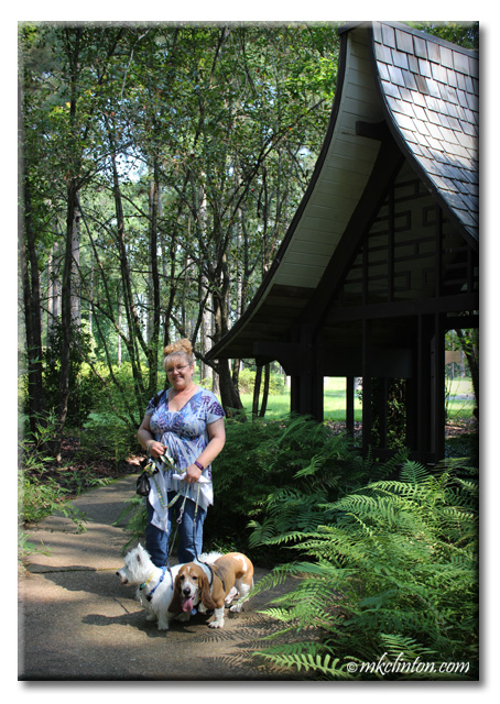 Walking at the American Rose Center with Bentley basset & Pierre Westie