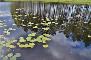 http://erwe.jalbum.net/På-husbilsresa-genom-Sveriges-Natur/