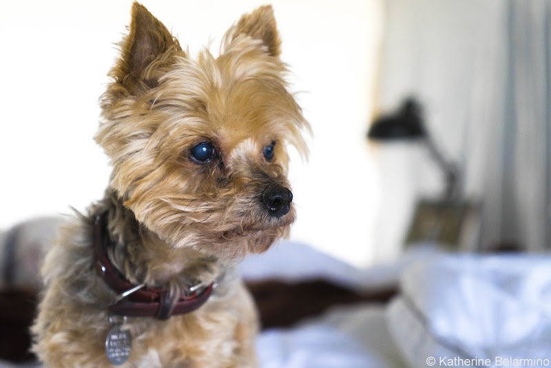 Henry Glamping Buellton Pet-Friendly Vacations Tips for Traveling with Dogs
