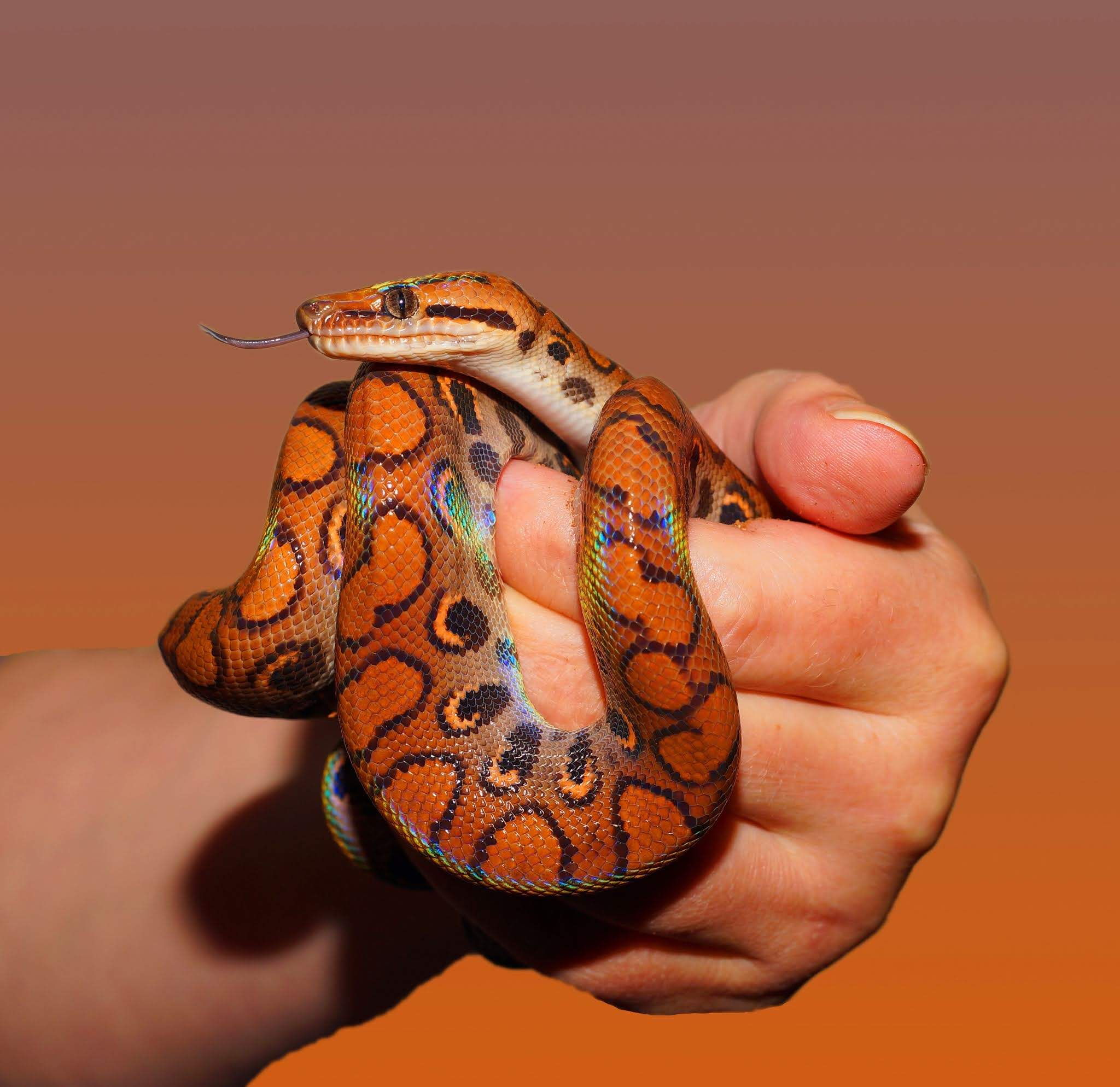 Chimanimani Woman Caught Breastfeeding A Snake