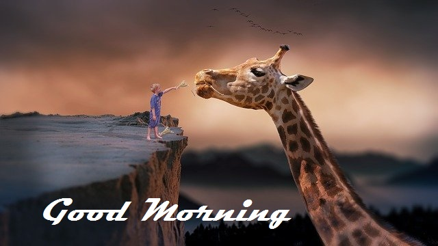 good morning nature images