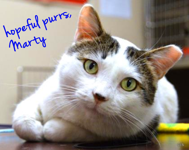 Sweet Marty was a Wayside Waif with FIV. Thankfully, he found a loving family to adopt.