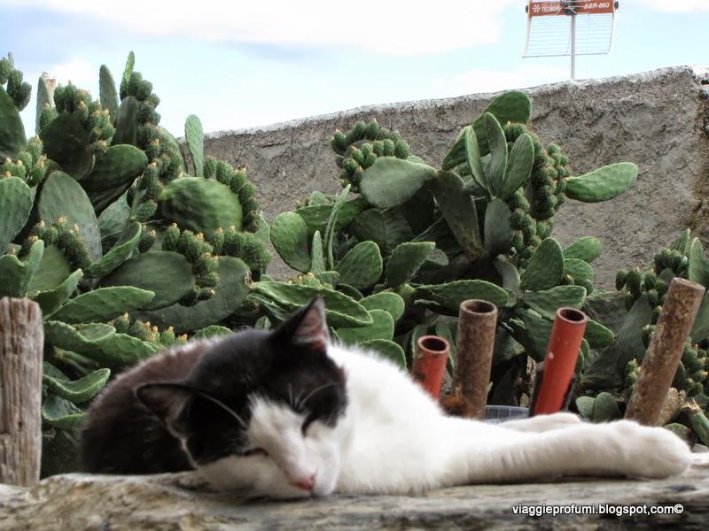 Gatto ad Amorgos