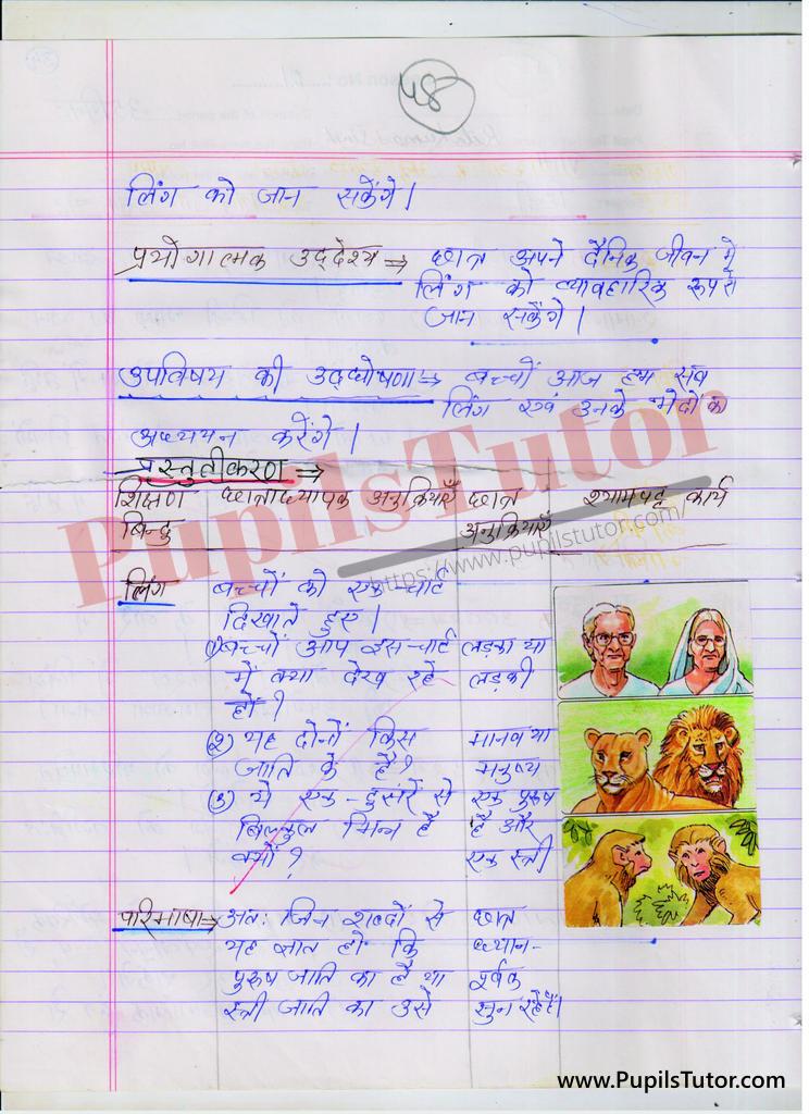 बीएड ,डी एल एड 1st year 2nd year / Semester के विद्यार्थियों के लिए हिंदी व्याकरण की पाठ योजना कक्षा  3, 4, 5, 6 , 7 , 8 के लिए लिंग टॉपिक पर