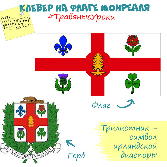 клевер на флаге Монреаля