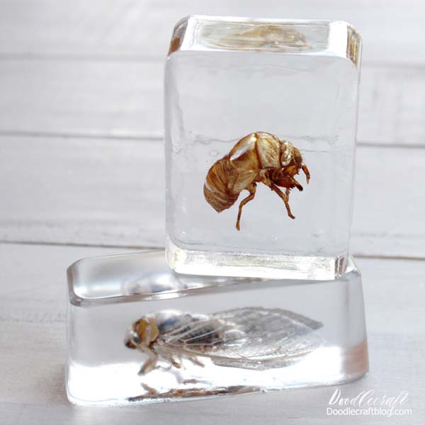 Cicadas in resin for the perfect clear resin specimen art