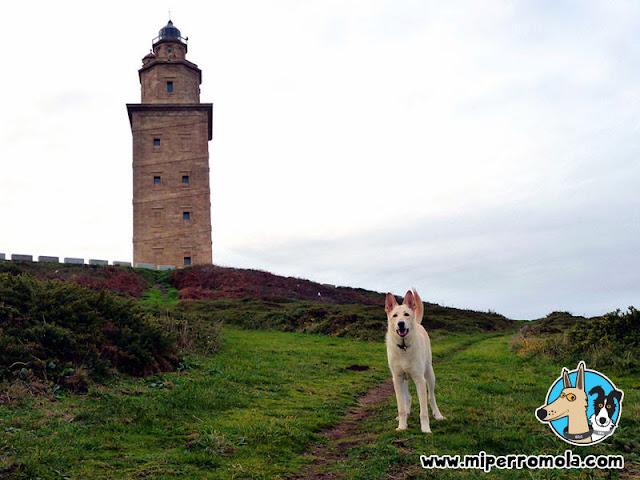 Can de Palleiro en la Torre de Hércules