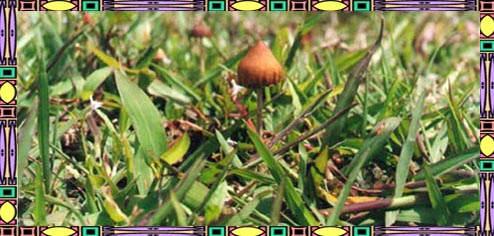 Magic Mushroom Hunters: November 2012