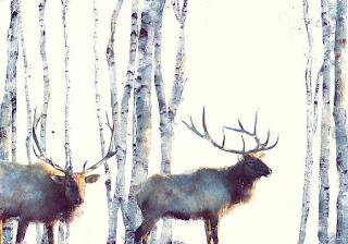 diseños-graficos-con-animales-inspirados-en-la-naturaleza cuadros-con-animales-diseño-grafico