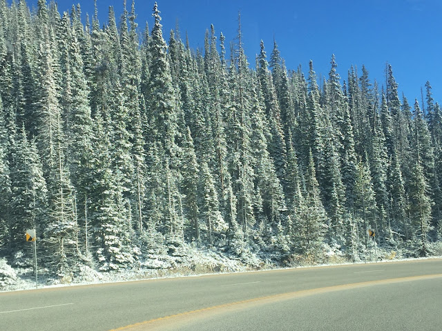 Rocky Mountain National Park snow-capped trees