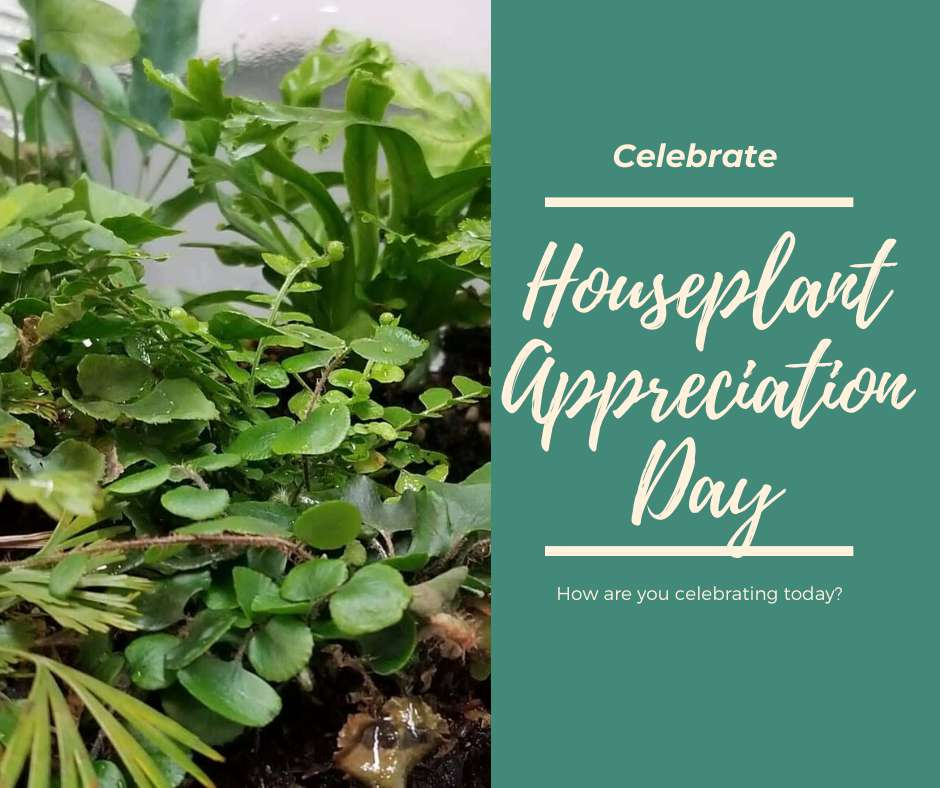National Houseplant Appreciation Day Wishes Photos