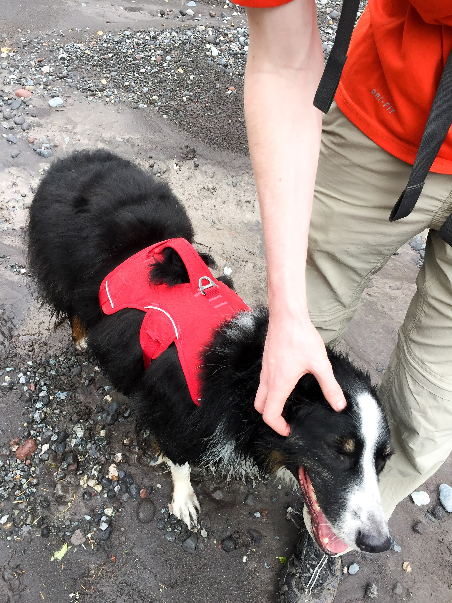Hiking with dog at Skookum Flats
