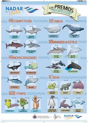 niveles natacion infantil Real federacion española de natacion RFEN