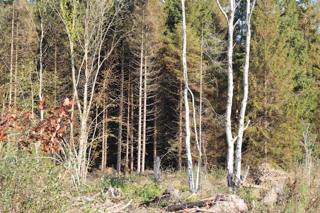 Scohaboy Woodland