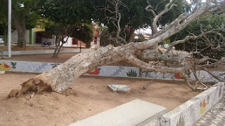 Vento provoca queda de árvore em Cuité nesta terça; cidade está sob alerta