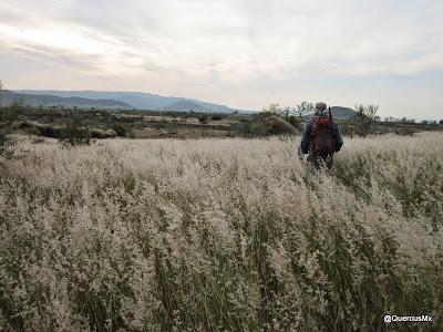 Miembro del Grupo Montañista Colli caminando entre el pastizal