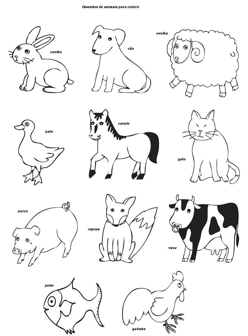 Desenhos Para Colorir De Animais Invertebrados Melhores Casas De