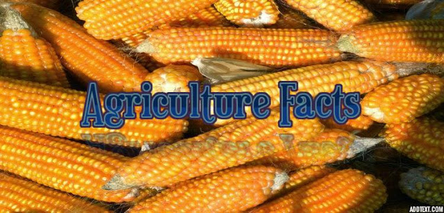 10 interesting facts about agriculture
