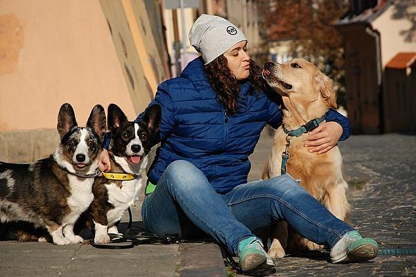 pies, psy, futra, czterołape, kundle, pies w mieście, wychowanie psa, welsh corgi, welsh corgi cardigan, corgi, wyjazd z psem, podróż z psem, urlop z psem, szkolenie psa