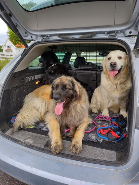 hunder i bagasjen
