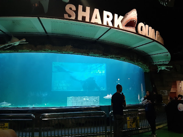 Live Feeding Shark: Face to Face di Seaworld Ancol